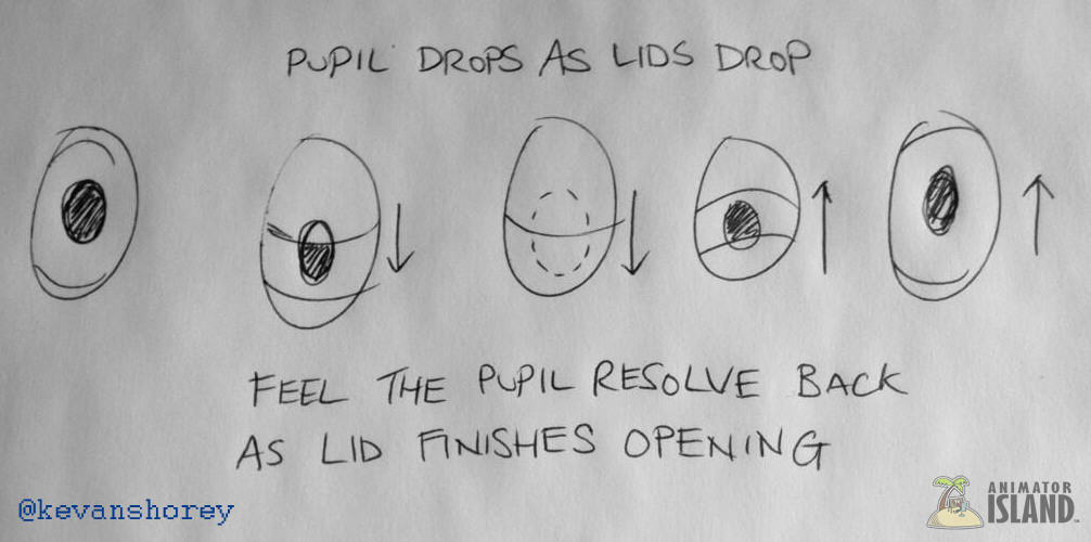 Pupil Movement on a Blink